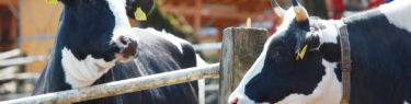 神奈川県愛甲郡愛川町 服部牧場|全国牧場ガイド USHICAMERA