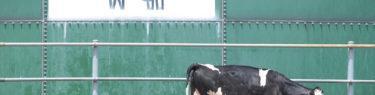 埼玉県秩父郡東秩父村 秩父高原牧場/彩の国ふれあい牧場|全国牧場ガイド USHICAMERA