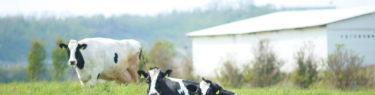 石川県河北郡 夢ミルク館(ホリ牧場)|全国牧場ガイド USHICAMERA