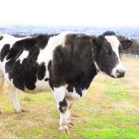 富山県富山市 丘の夢牧場|全国牧場ガイド USHICAMERA