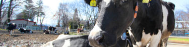 東京都青梅市 青梅畜産センター|全国牧場ガイド USHICAMERA