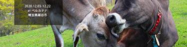 牛写真展のお知らせ