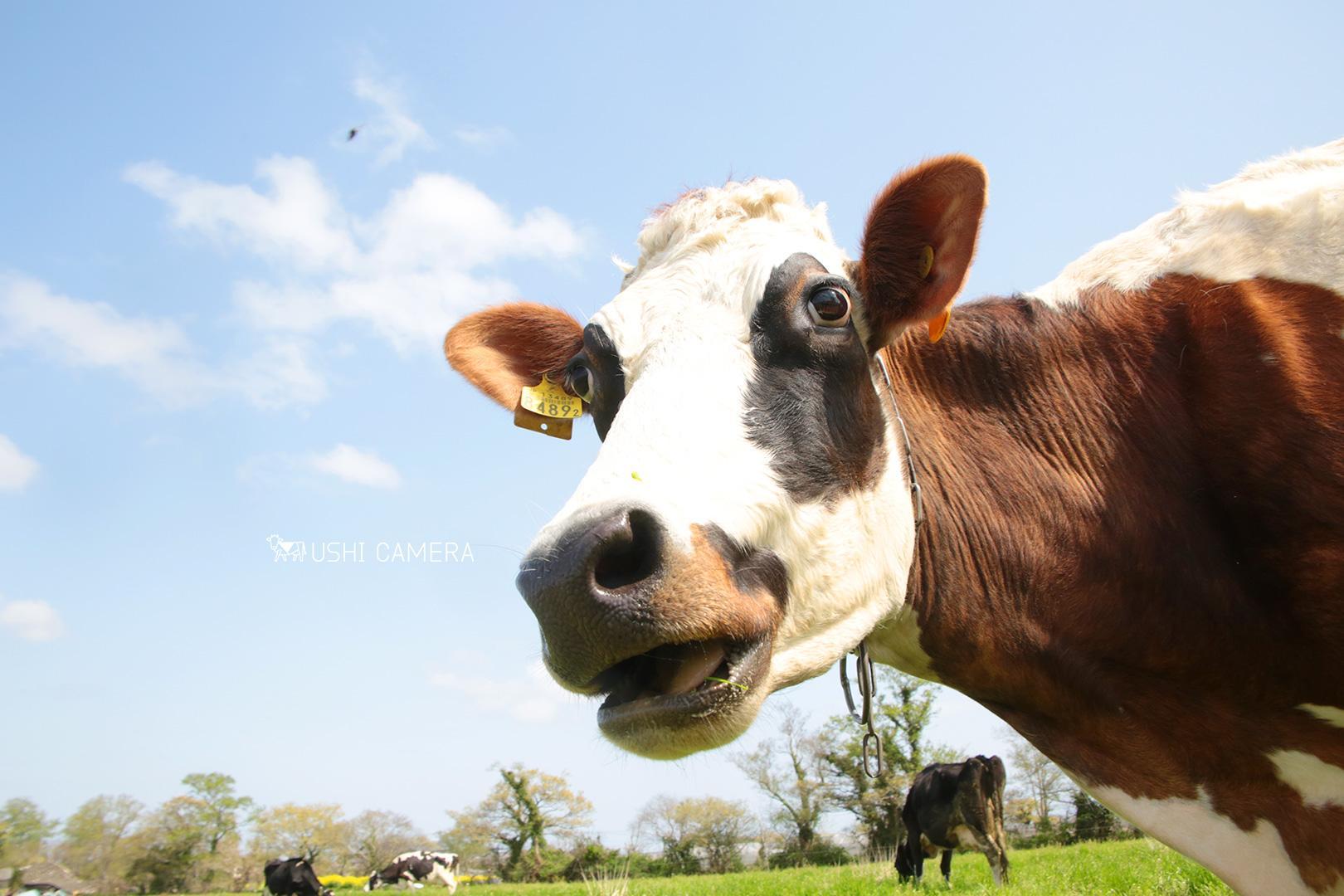 新利根協同農学塾農場(上野牧場)|茨城県稲敷市のホルスタイン牛の写真